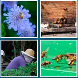 4-fotos-1-palabra-nivel-10-palabra-6